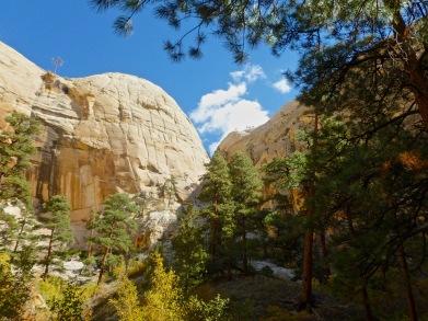 Towering Canyon walls and Ponderosa Pines
